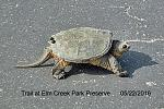 Click image for larger version.  Name:Turtle.jpg Views:125 Size:50.6 KB ID:18107