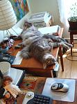 Click image for larger version.  Name:kitty-desk-1small.jpg Views:158 Size:186.9 KB ID:8100
