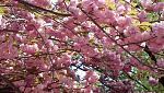 Click image for larger version.  Name:pinktree2.jpg Views:69 Size:98.4 KB ID:18207